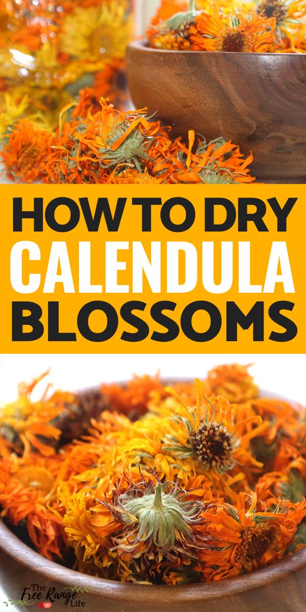 How to Dry Calendula Flowers Calendula, Herbalism, Dried