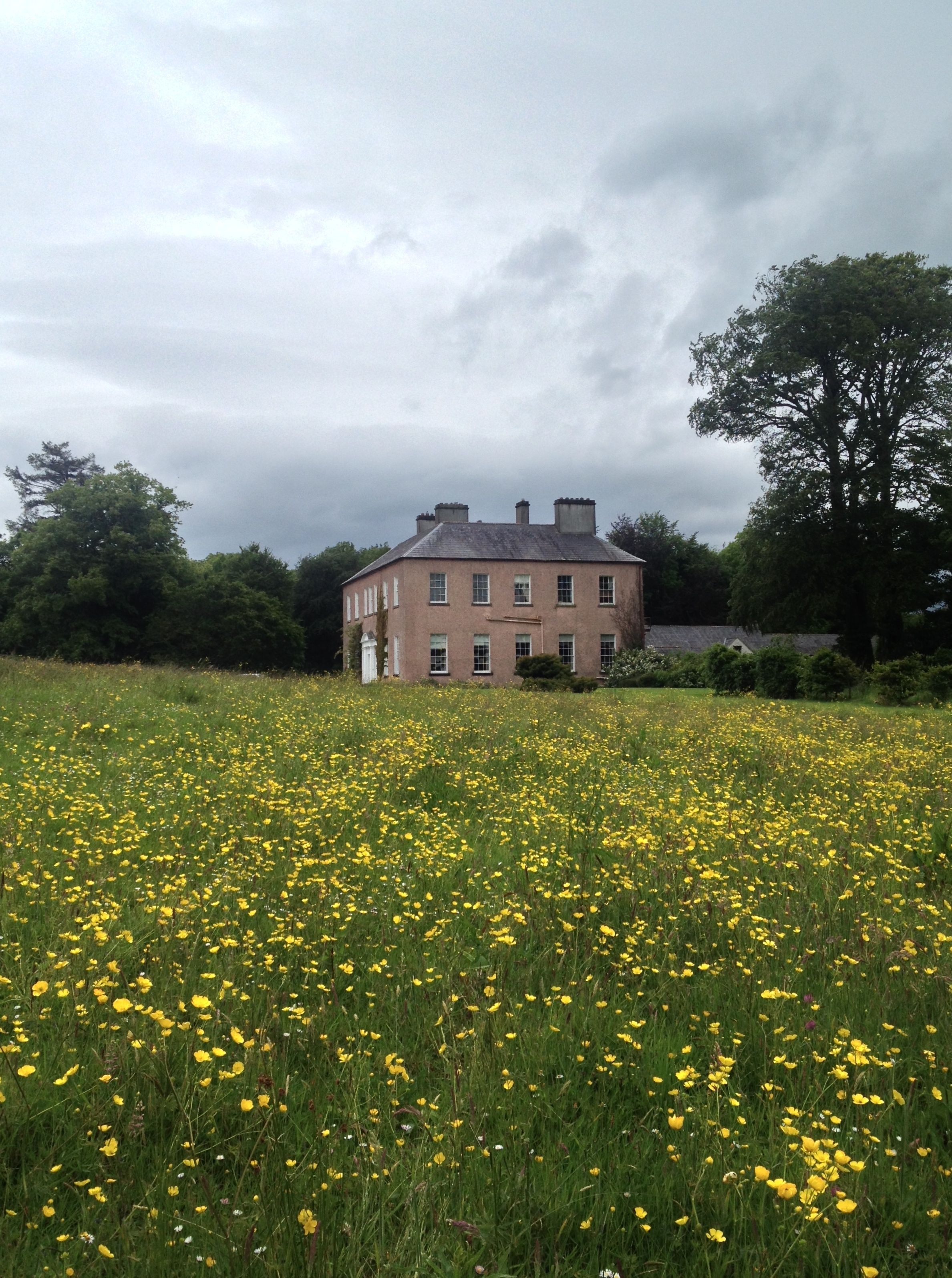 An Amazing Meadow Of Yellow Flowers Leading Up To This Irish Estate