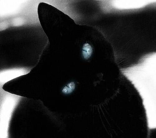 Beautiful Black Cat With Blue Eyes Black Cats Cute Cats Cats