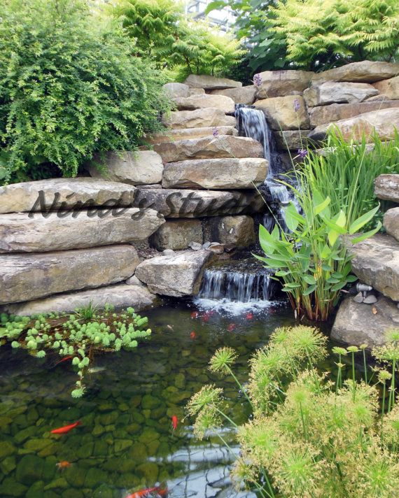 "Landscaping Ponds And Waterfalls: Photo On Canvas, 24"" Horizontal X 36 "" Vertical, Koi Fish"