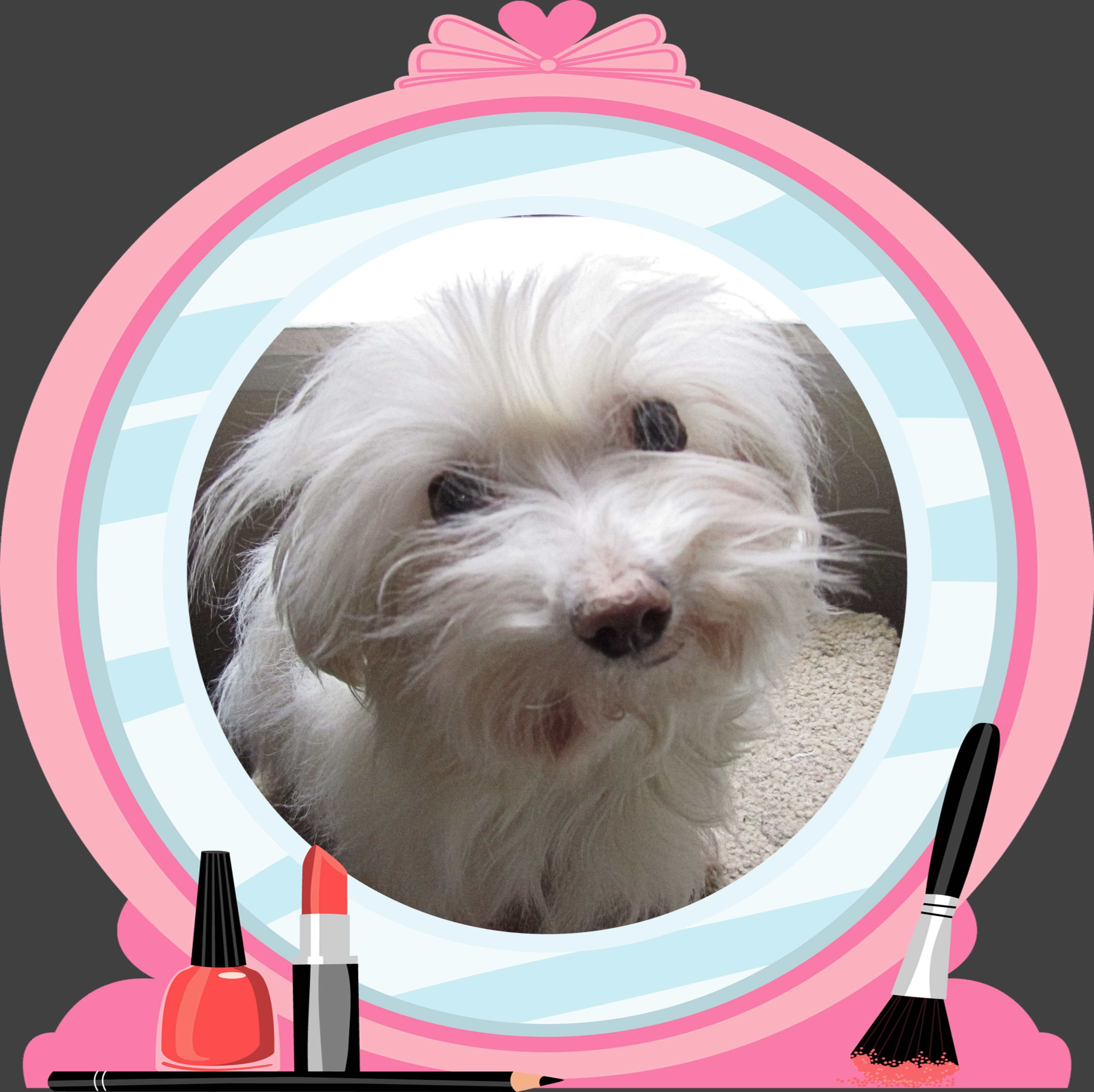 Adopt Little Lulu From K9kastle Petfinder Org A Tiny Maltese Out