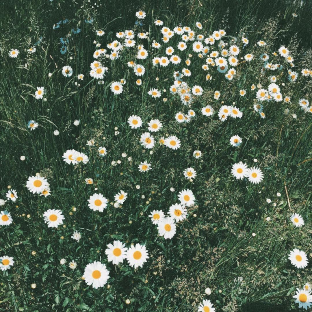 Hello June! 🌾 #mornings #flowerpower