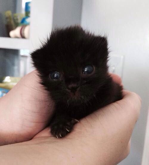 Sweet Tiny Biny Black Kitty With Images Cute Baby Animals