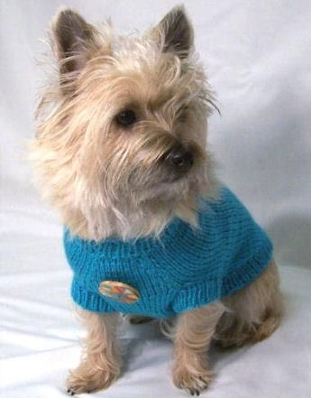 Kinsey S First Modeling Gig Modeling This Sweater For Ebay
