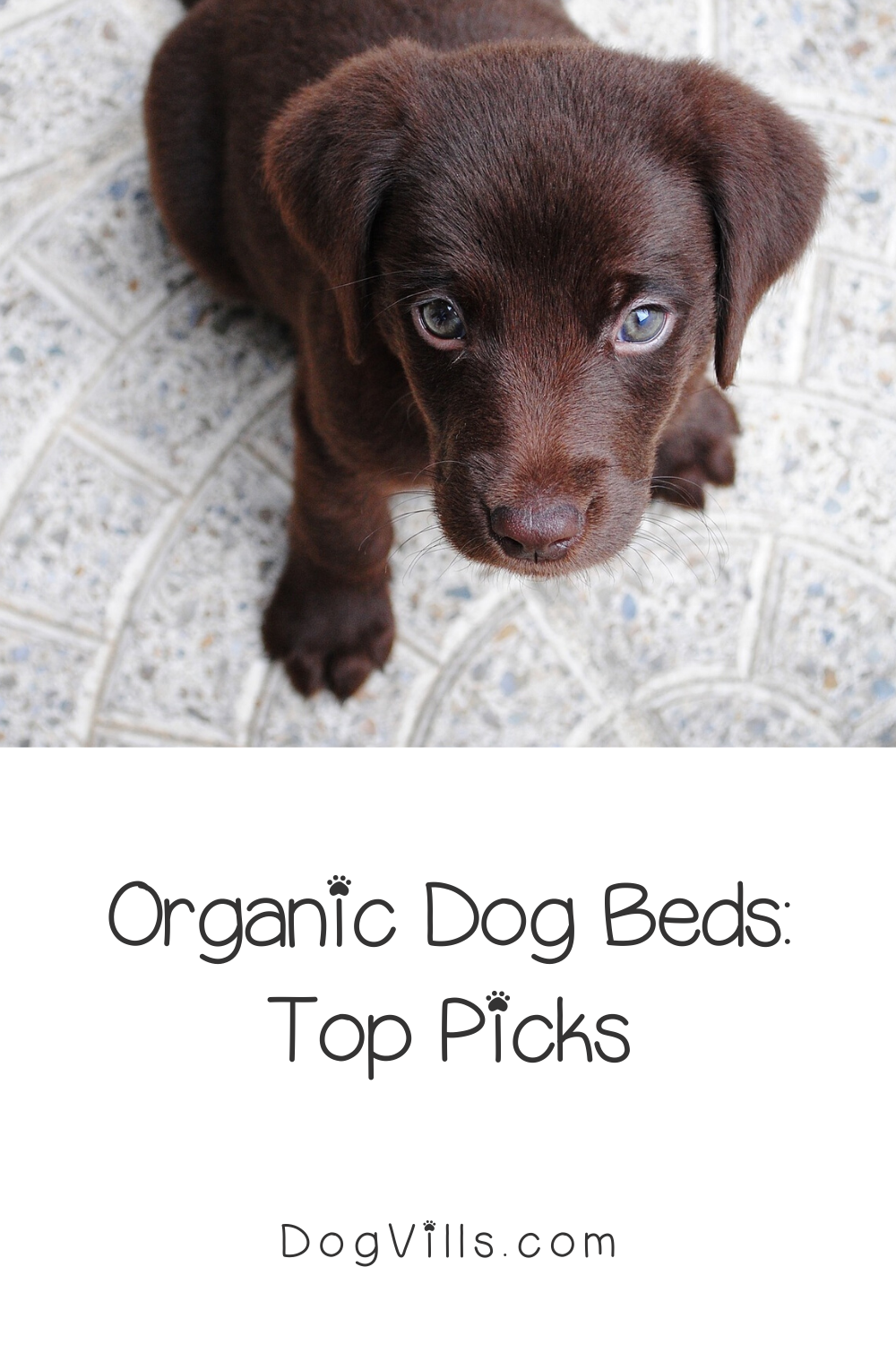 If you're having a hard time finding the best organic dog