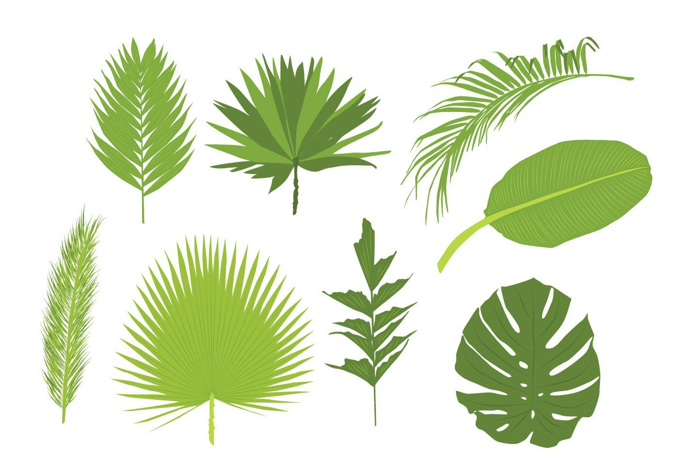 Jungle Leaves Free Vector Art (3293 Free Downloads