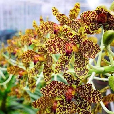 Attendees Are In For A Treat At Queen Elizabeth Ii Botanic Park S Annual Orchid Show This Weekend Read More On Our Weekly Blog Link In The Bio Cayma Orchids