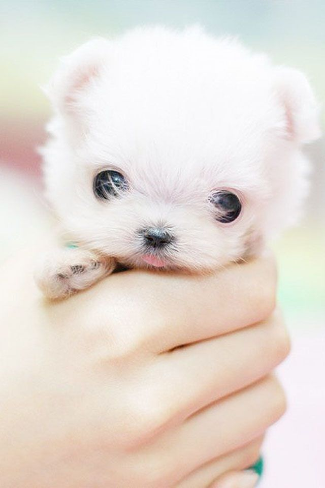 It S Like It Could Fit In My Pocket Cute Baby Animals Cute Animals Cutest Puppy Ever