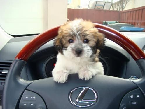 An appropriate Lexus co-pilot, no?