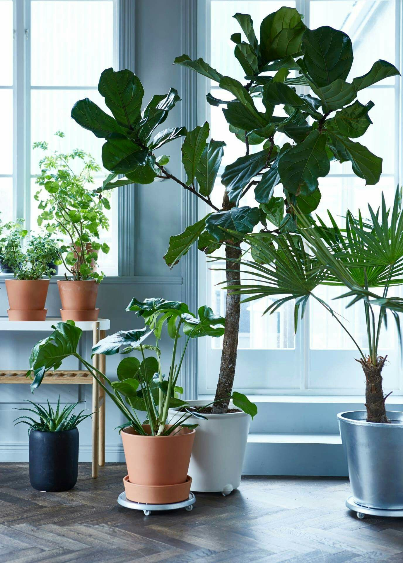 plantes d 39 int rieur chez ikea lakberendez plante interieur plante verte s int rieur ikea. Black Bedroom Furniture Sets. Home Design Ideas