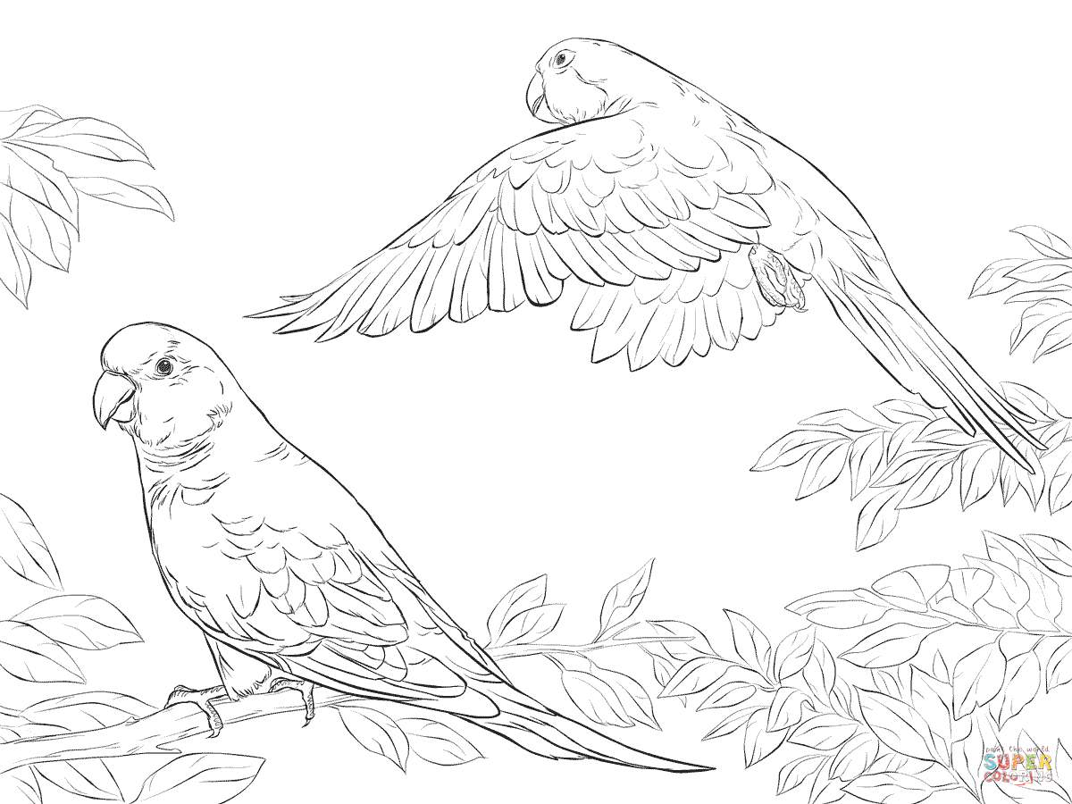 two-quaker-parrots-coloring-pages.png (1200×900) | Templates animals ...