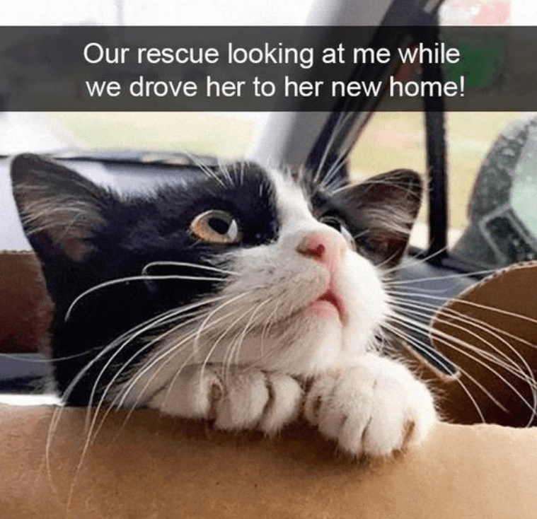Cats In Cars: The Funny Snapchat Version