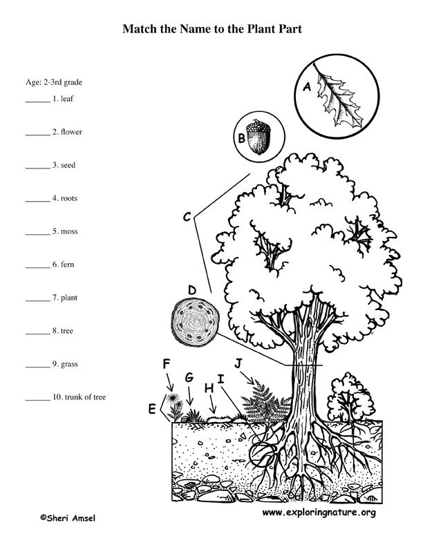 Learn about Plants with a Scavenger Hunt from
