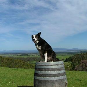 Kelly Wine Dog Windy Ridge Winery South Gippsland S Oldest