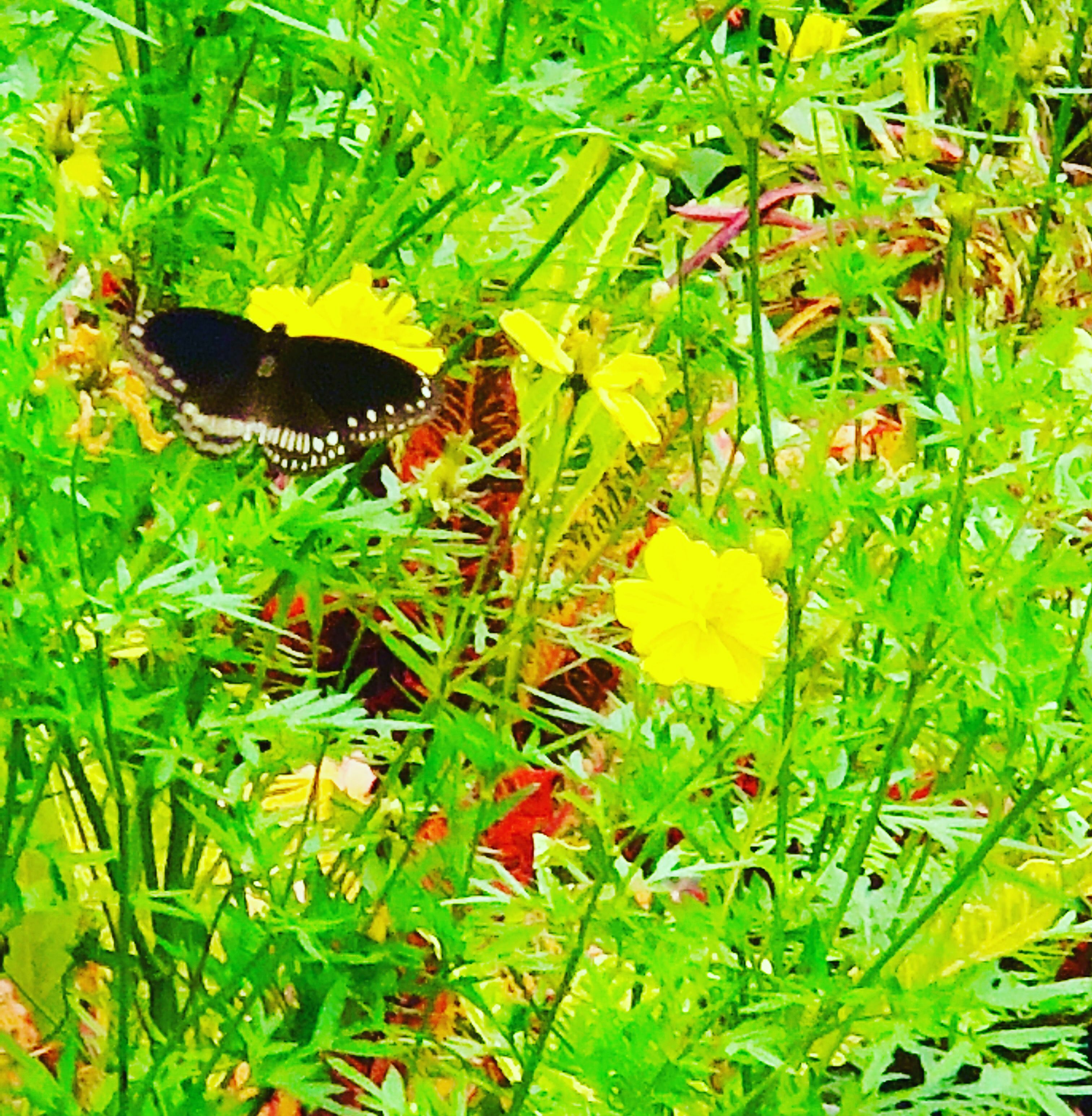 Kerala Holiday Butterfly park, Asia travel, Travel scrapbook