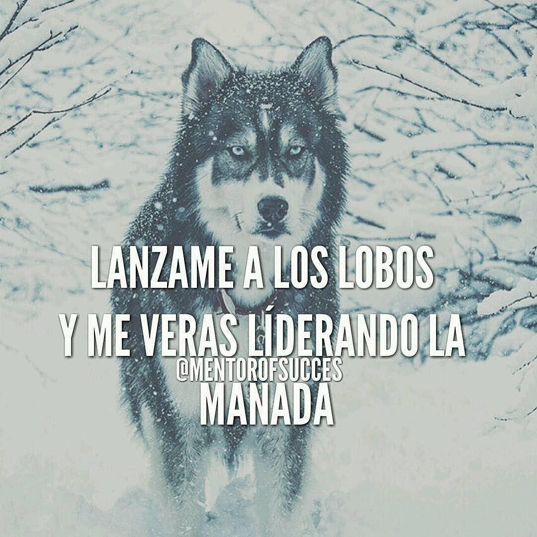 Repost @mentorofthesucces Lanzame a los lobos y me veras liderando ...
