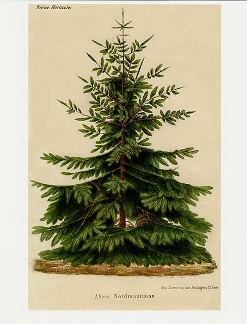 Taking Some Time Off Vintage Christmas Botanical Botanical Prints