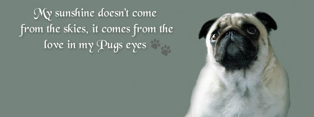 Pug Facebook Cover Photos For Your Timeline Pug Quotes Met