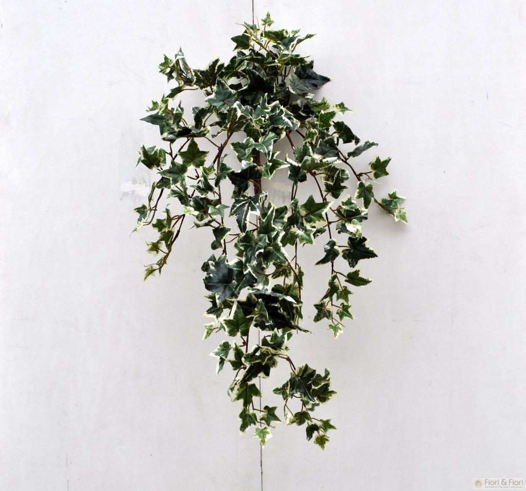 Edera Pianta Da Interno 12 piante perfette per la camera da letto | piante, camera