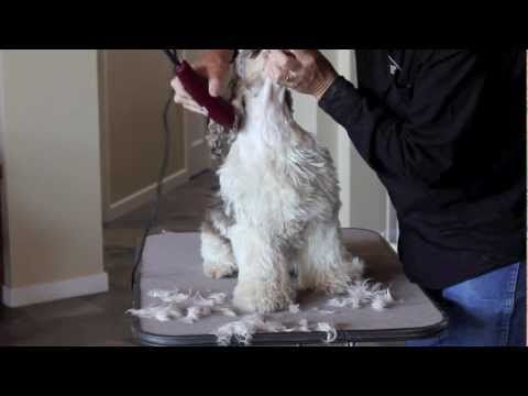 how to give a haircut to a dog
