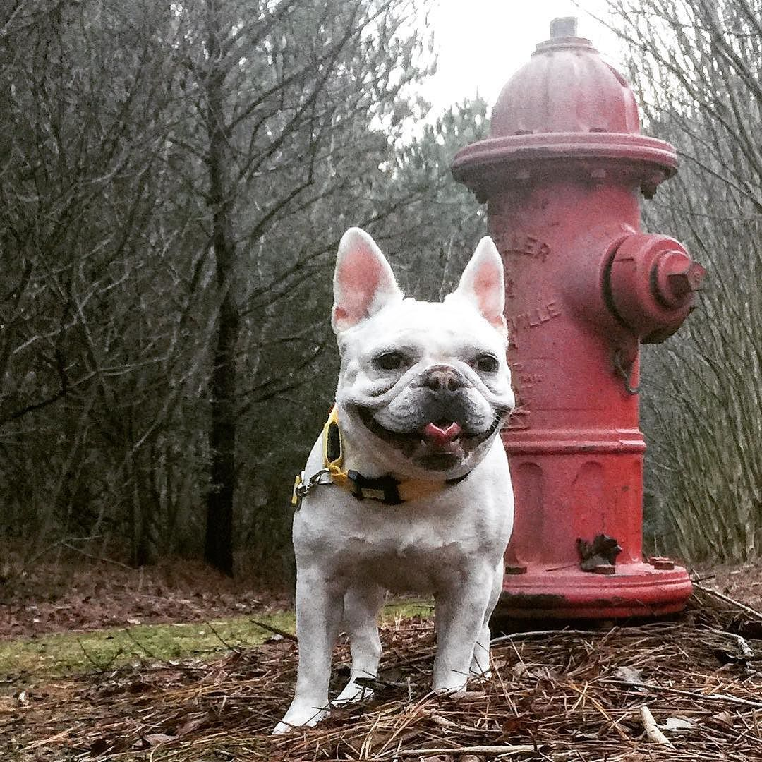 Excited to find her very own red fire hydrant! French