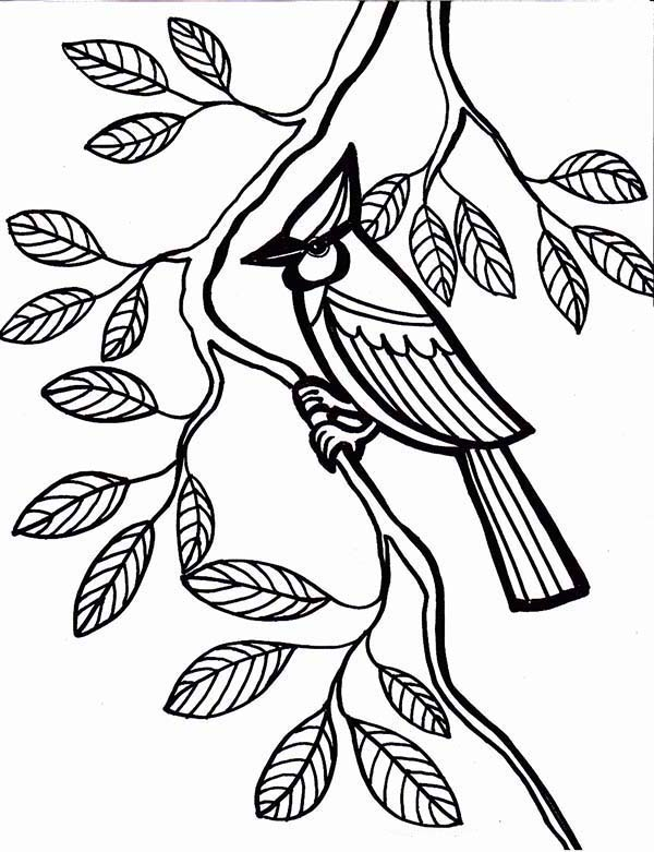 Cardinal Bird Come To Rest Under Tree Leaves Coloring Page ...