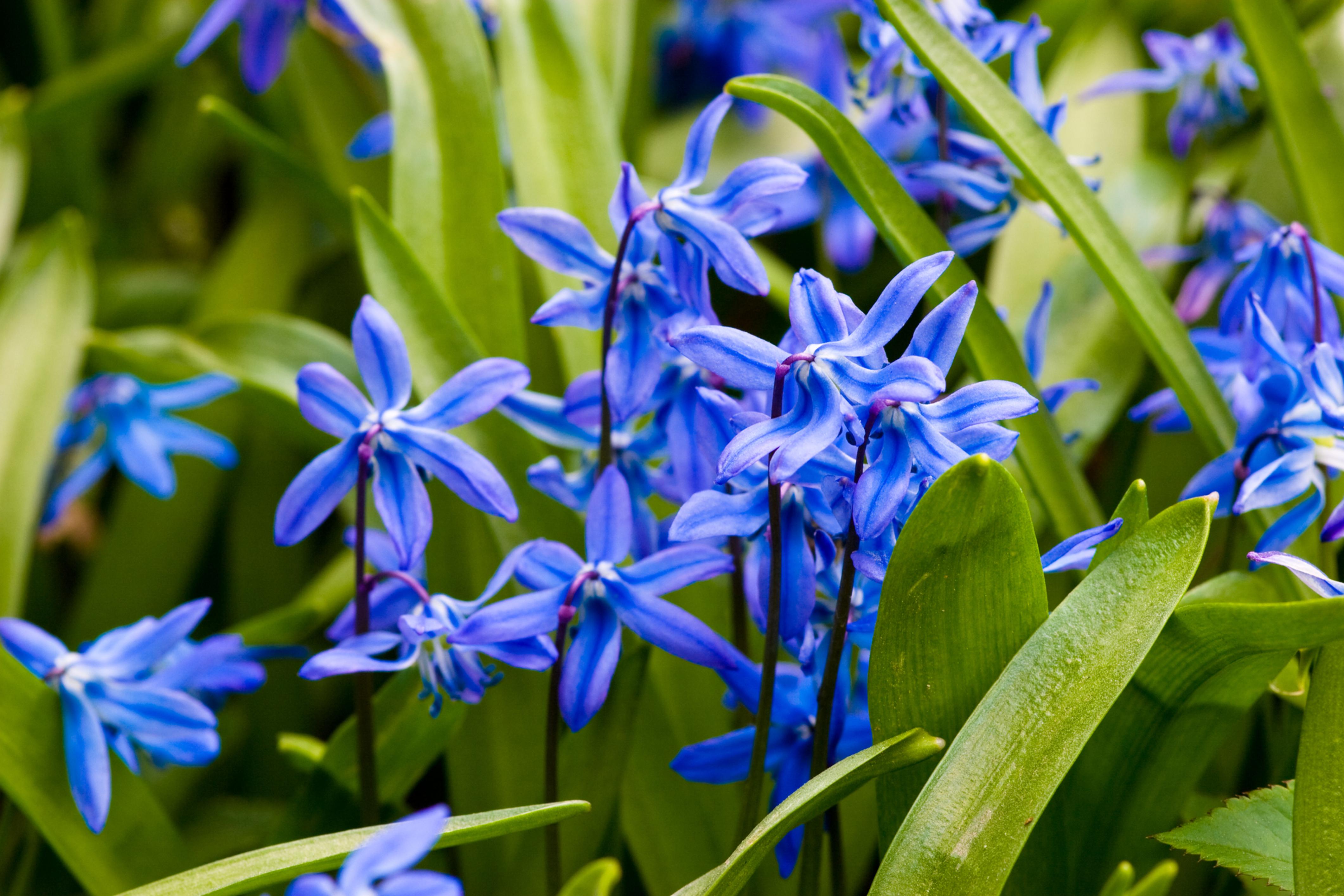 Flori De Primavara Sfaturi Imagini Denumiri In 2020 Flori