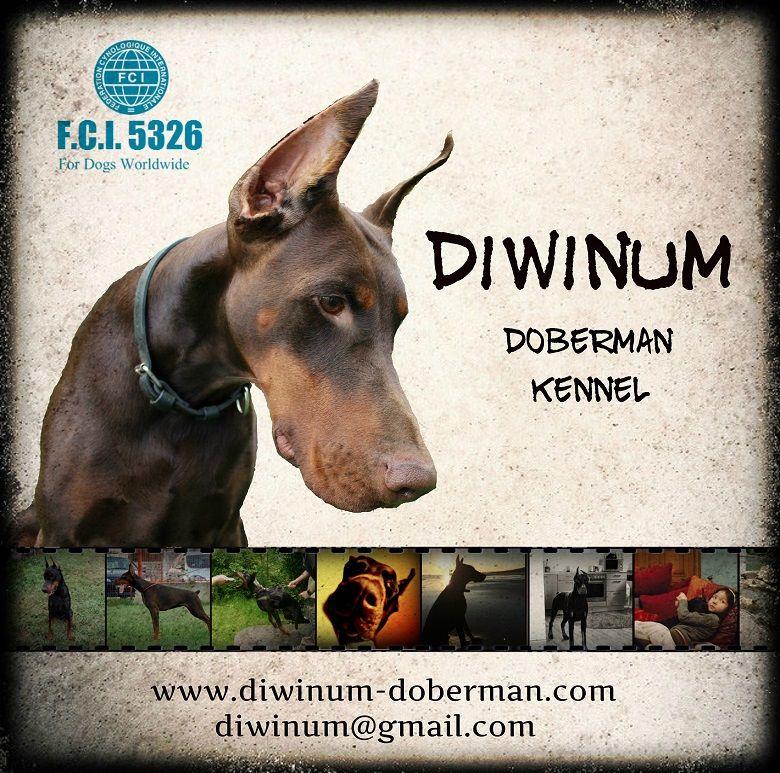 Diwinum Youtube Doberman Dogs Movies