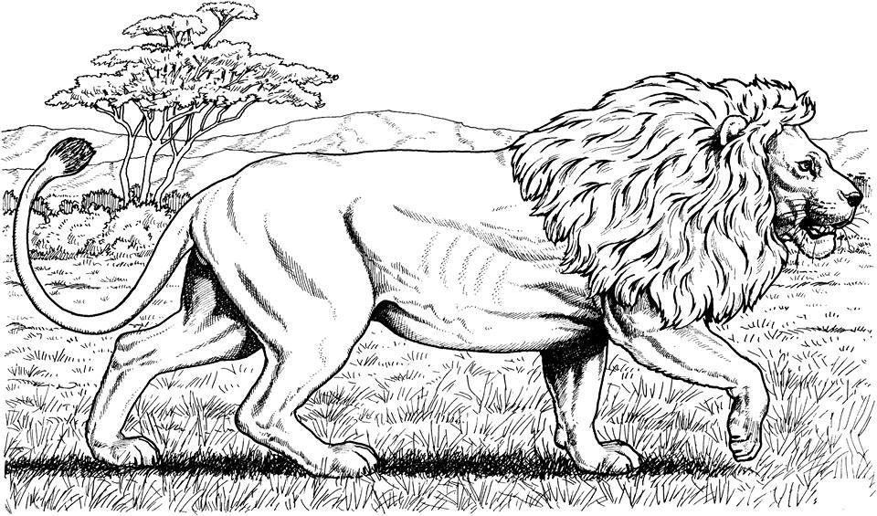 Рисунки животных лев