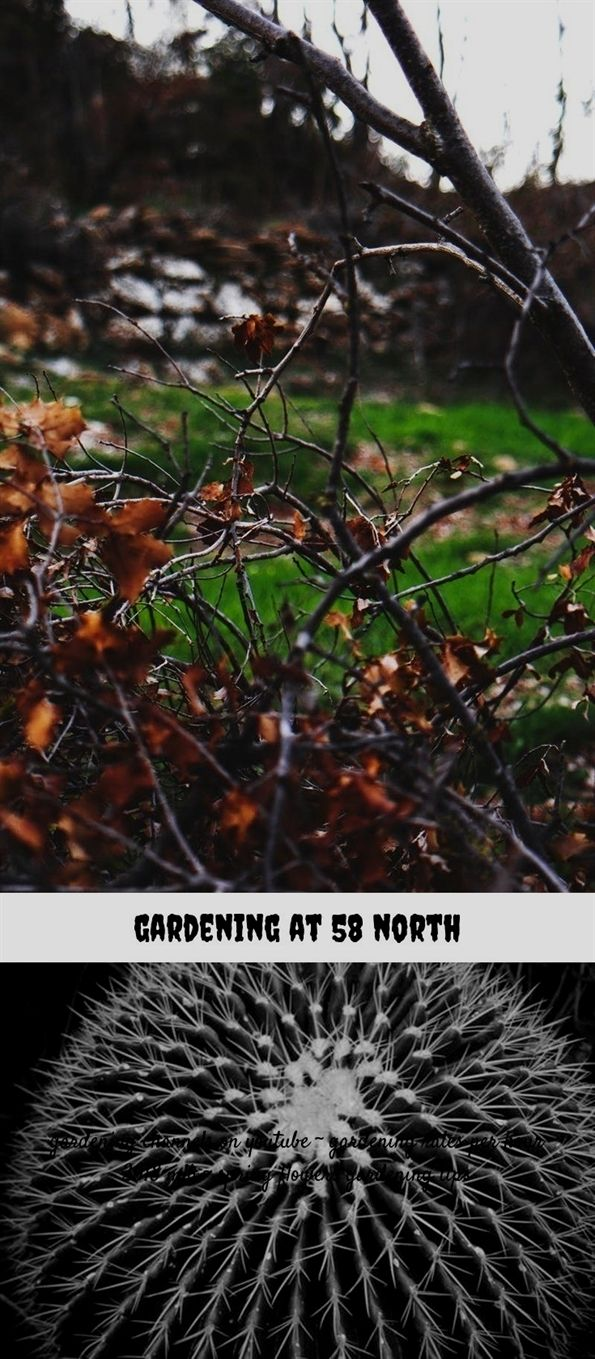 Gardening At 58 North 65 20180711063100 23 Music In The Garden Room Wiring Lights Uk Acadia Plastic Decorative Fencing New England Zones For