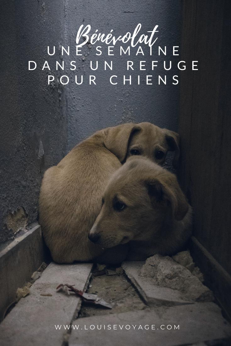 Benevolat Dans Un Refuge Pour Chiens En 2020 Benevolat Chien Voyage Europe