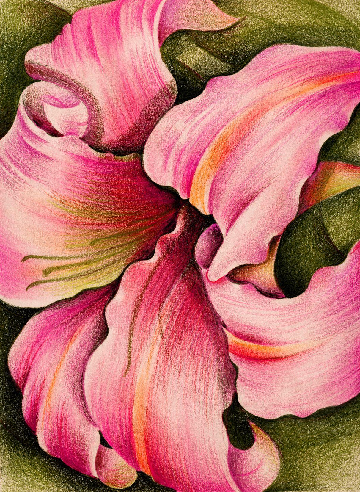 de -lirios   Resim   Pinterest   Colored pencils, Flowers and Paintings