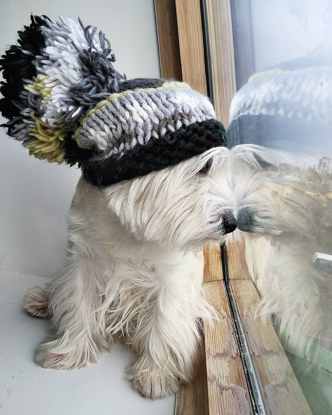 Christmas is comingTAP link in my bio @westiemoments and shop unique westie gifts for your friends and family ON TIME! . made in USA International ...