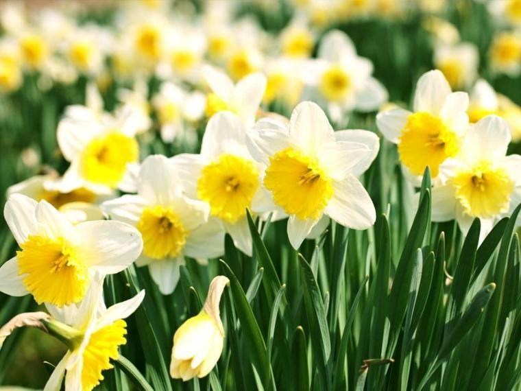 Narzissen Nutzliche Tipps Zum Pflanzen Und Pflege Neueste Dekor Blumenzwiebeln Pflanzen Blumen Fur Garten Pflanzen