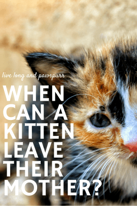 When Can A Kitten Leave Their Mother In 2020 Kittens Cat Questions Kitten Care