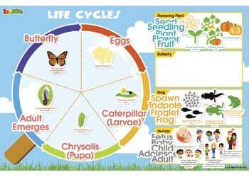 Magnetic Wall Sticker – Life Cycles