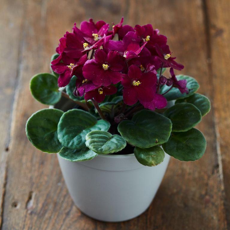 17 planting Indoor desk ideas
