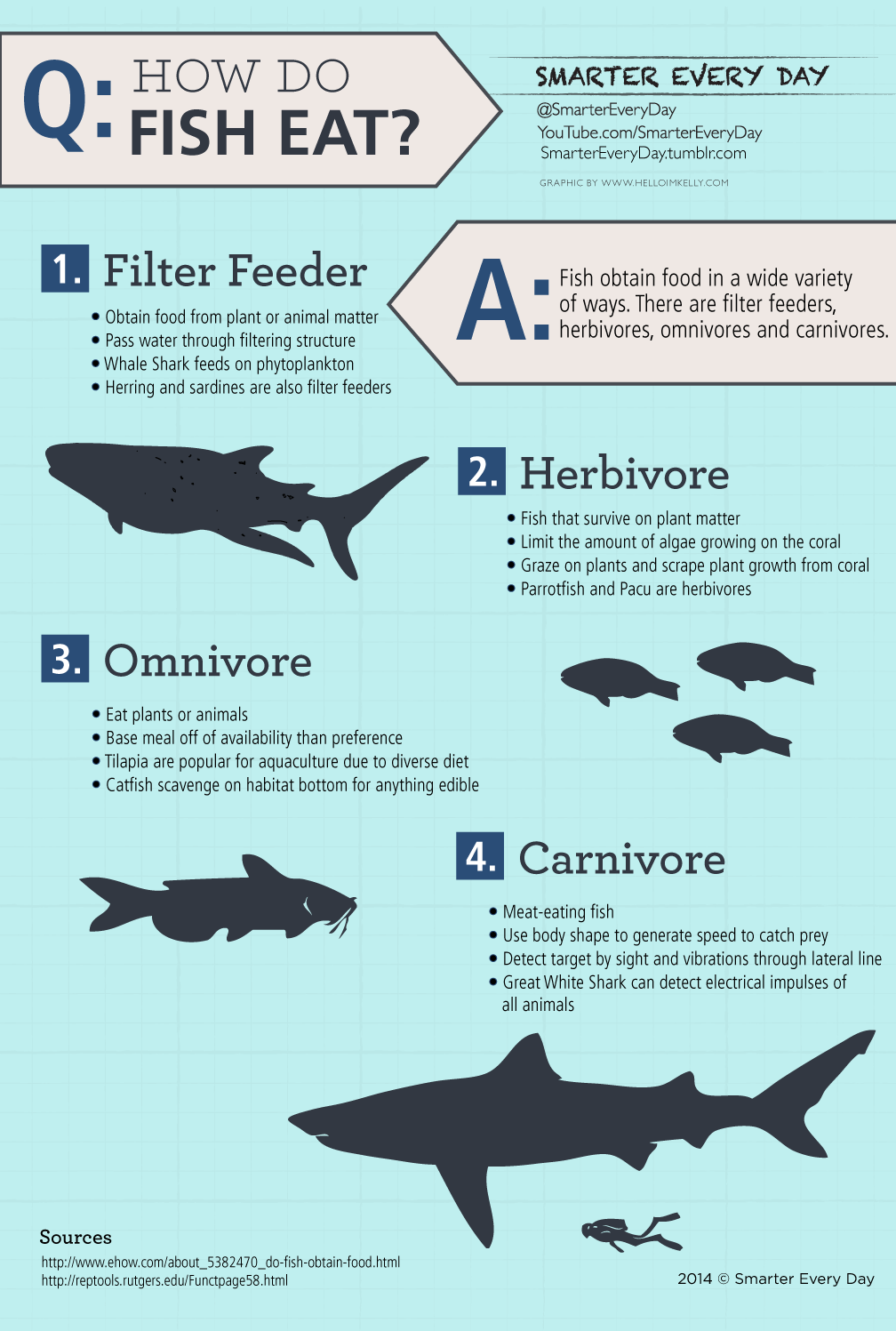 how do fish eat infographics pinterest infographic this or that questions and biology. Black Bedroom Furniture Sets. Home Design Ideas