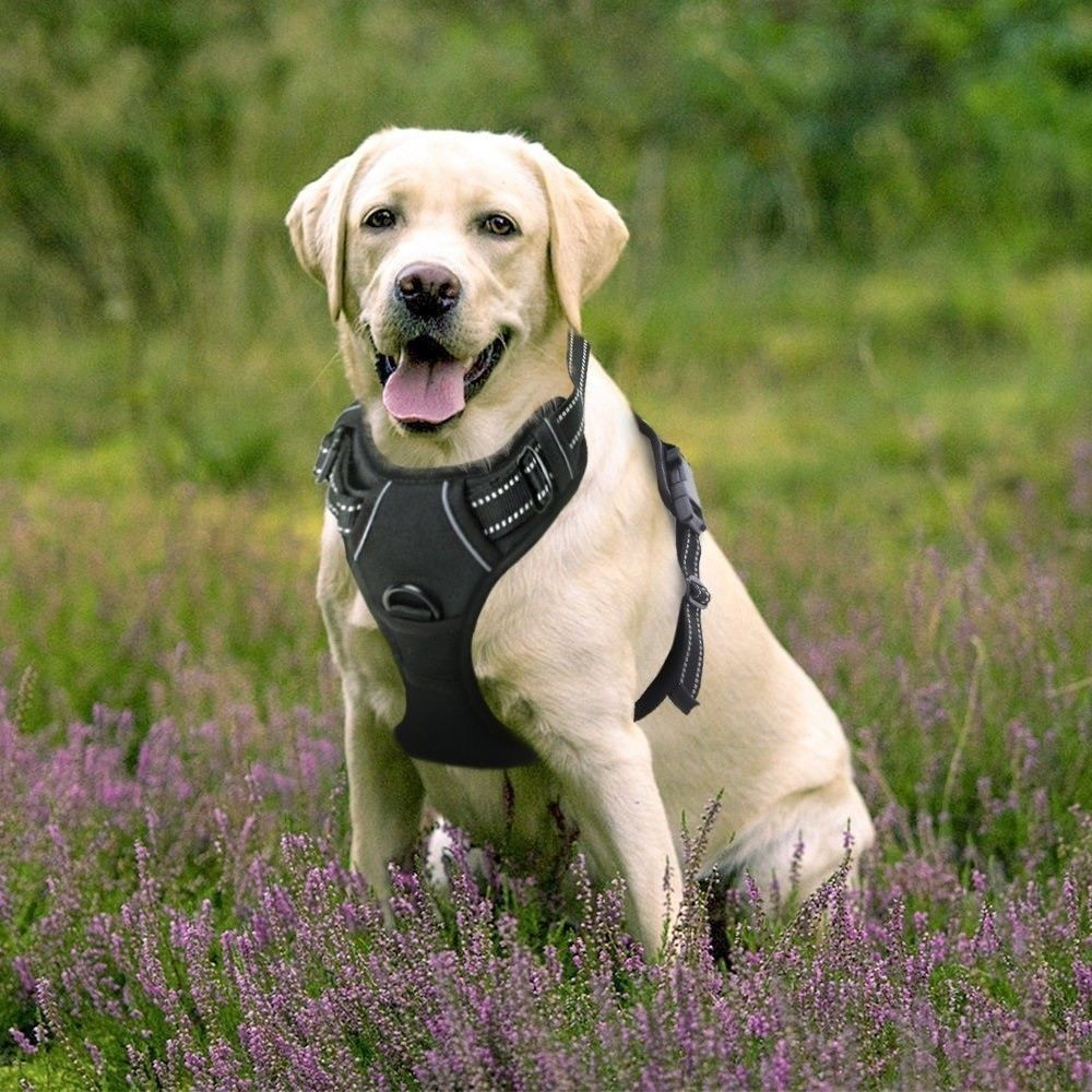 Extra Large Dog Harness Comfortable Adjustable Fabric Durable