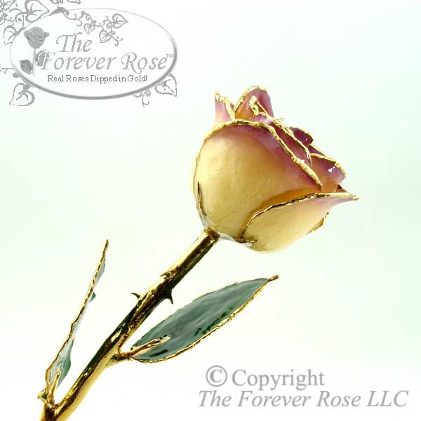 White to Amethyst 24K Gold Trimmed Forever Rose!