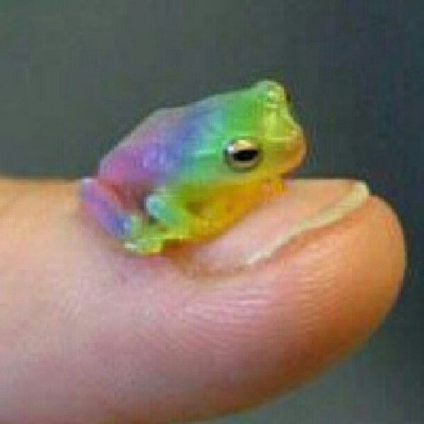 Beautiful Itty Bitty Rainbow Frog Frog Tree Frogs Cute Little Animals