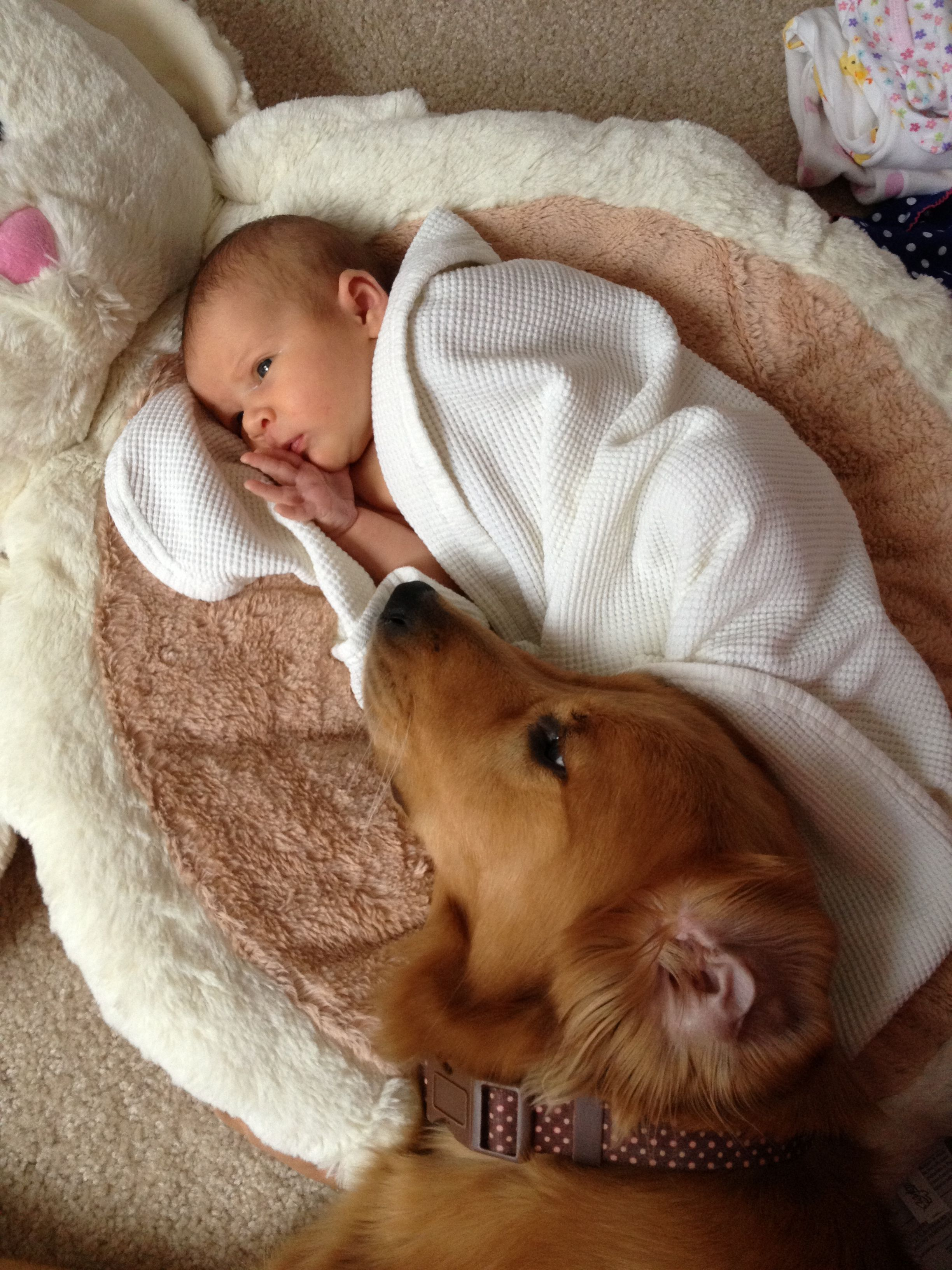 Molli Our Golden Retriever Was Loving On Our Newborn Baby Girl