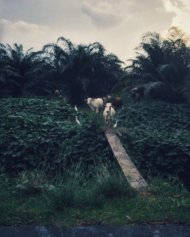 #somewheremagazine #tendermag #nowherediary #artsclassified #fisheyelemag #realismag #classicsmagazine #worldviewmag #onearthmagazine #portraitvision_ #magnificomagazine #apricotmagazine #nowherediary #indiependentmag #dreamermagazine #rentalmag #nightmaremagazine #midnightsafari #photography #lumix #portrait #sunset #forevermagazine #cow