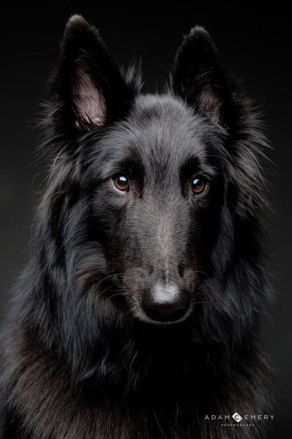 Pictures Of Large Dogs With Long Hair