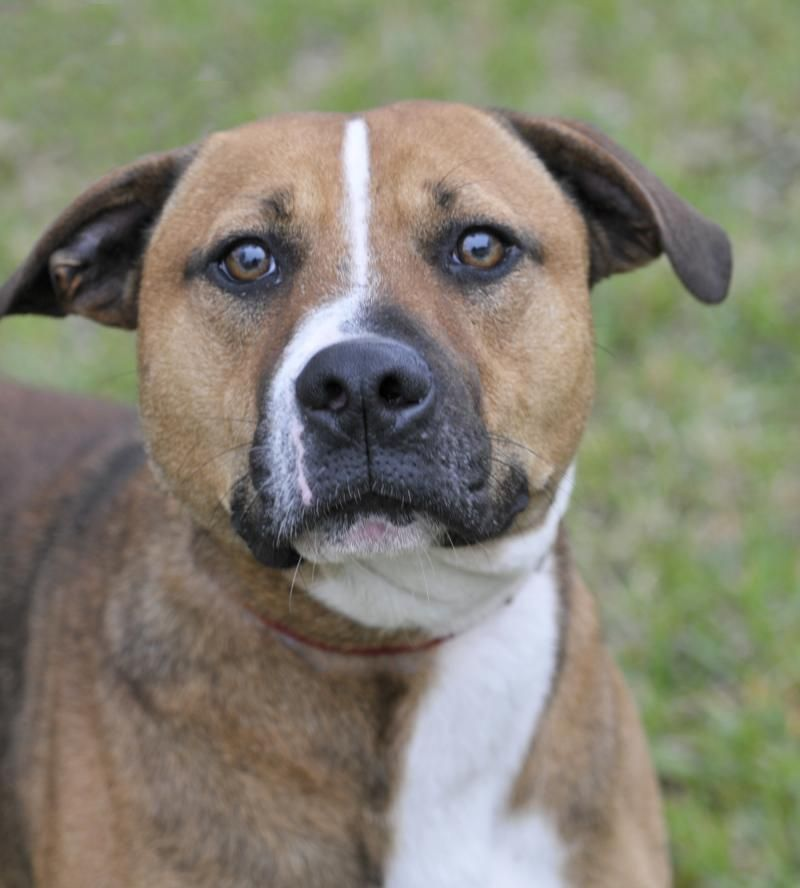 03/28/15 slMuggs Boxer Mix • Young • Male • Medium