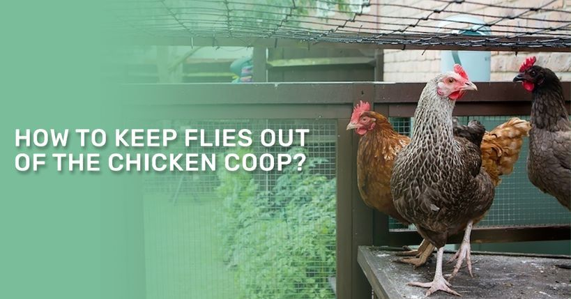 How To Keep Flies Out Of The Chicken Coop   Chicken coop ...