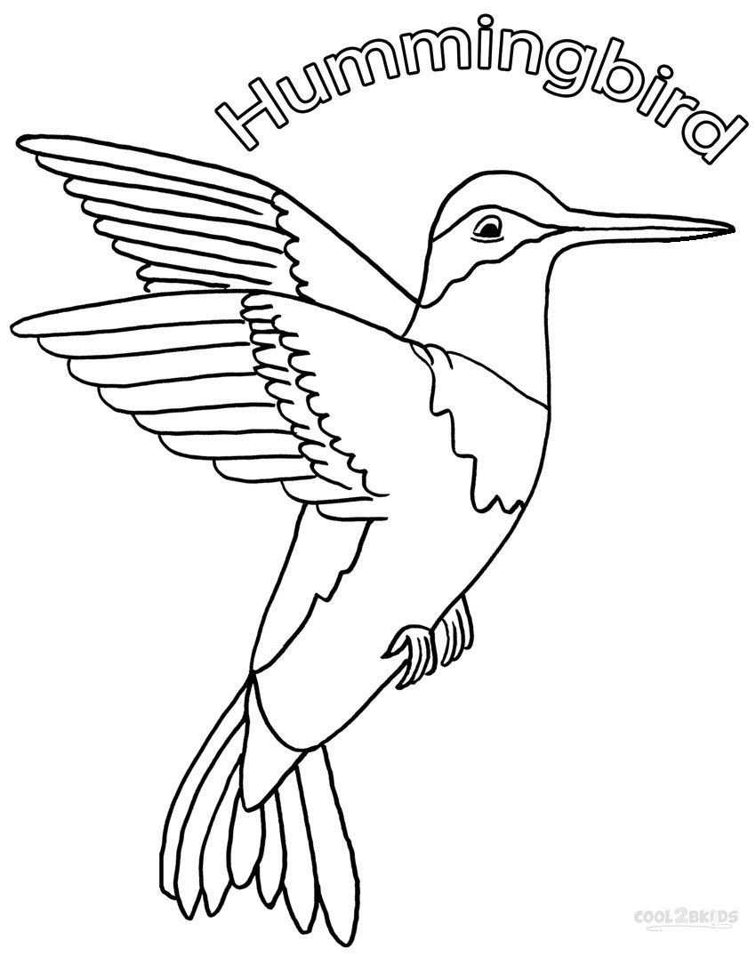 Printable Hummingbird Coloring Pages For Kids Cool2bKids Birds