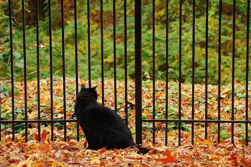 Fall cat by zir6rm on Flickr.