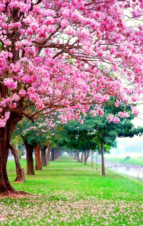 Pin By Gory Flower On طبيعة In 2020 Beautiful Nature Beautiful Landscapes Flowers Nature