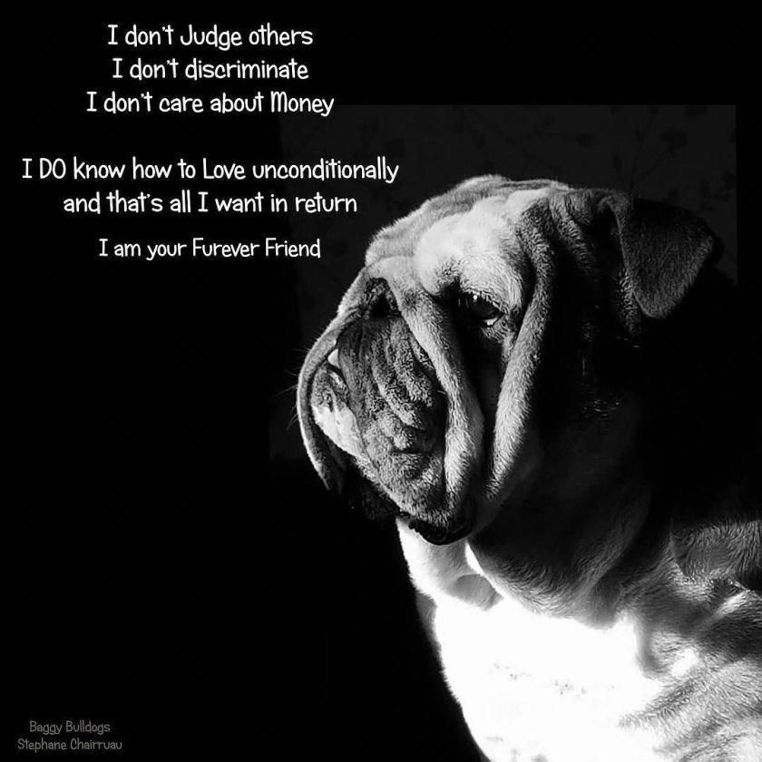 Visit Our Site For Additional Details On Bulldogs It Is Actually An Exceptional Location For More Information Bulldog Quotes English Bulldog Bulldog Funny